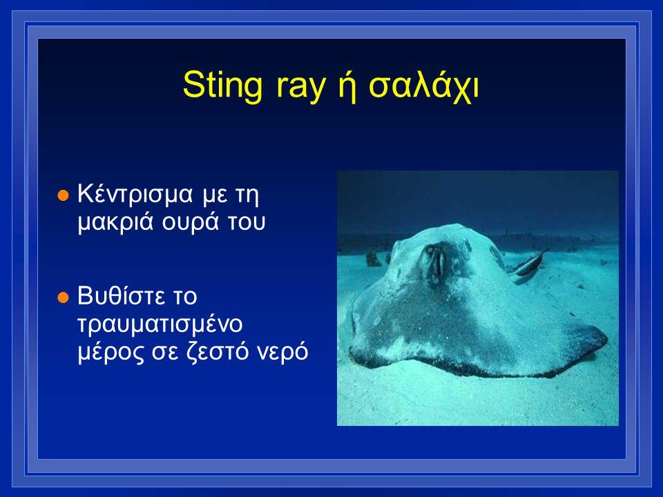 Sting ray ή σαλάχι l Κέντρισμα με τη μακριά ουρά του l Βυθίστε το τραυματισμένο μέρος σε ζεστό νερό