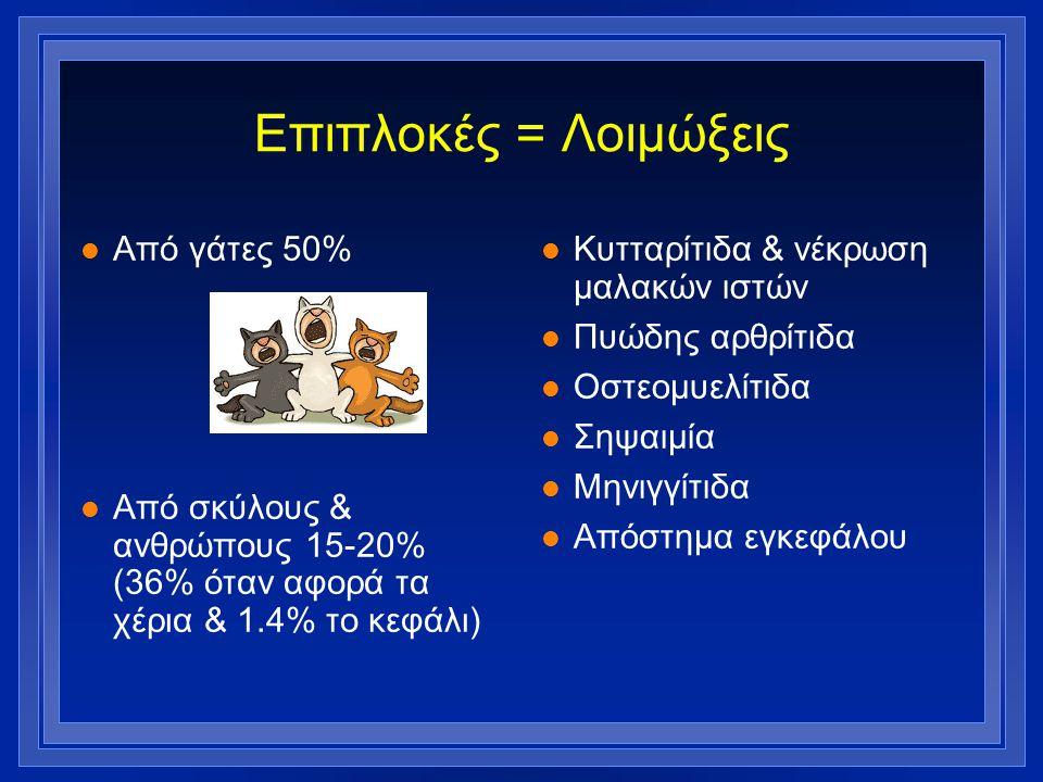 Επιπλοκές = Λοιμώξεις l Από γάτες 50% l Από σκύλους & ανθρώπους 15-20% (36% όταν αφορά τα χέρια & 1.4% το κεφάλι) l Κυτταρίτιδα & νέκρωση μαλακών ιστώ