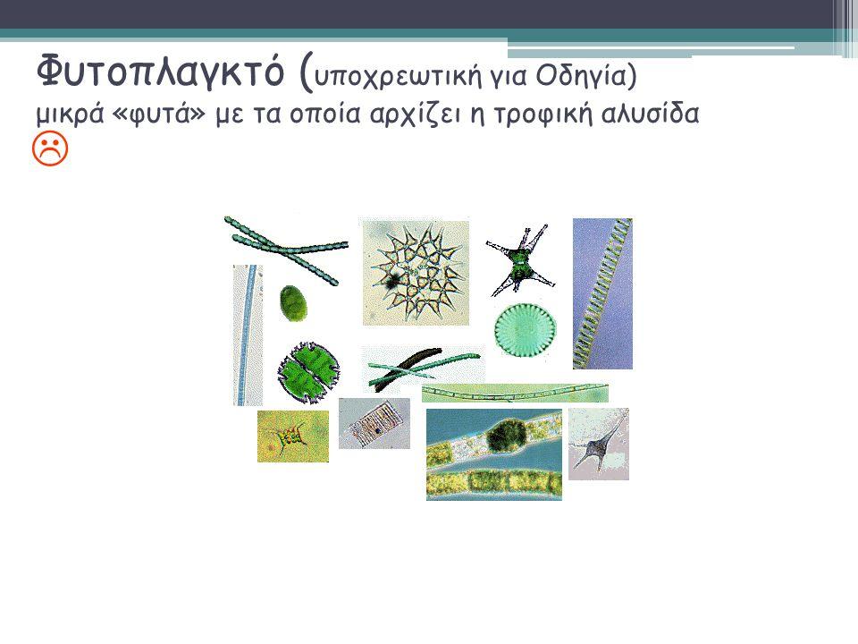 Φυτοπλαγκτό ( υποχρεωτική για Οδηγία) μικρά «φυτά» με τα οποία αρχίζει η τροφική αλυσίδα 