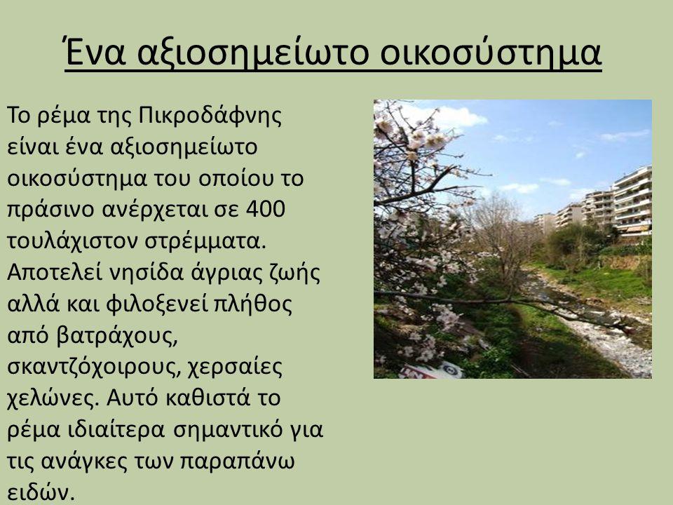 Ένα αξιοσημείωτο οικοσύστημα Το ρέμα της Πικροδάφνης είναι ένα αξιοσημείωτο οικοσύστημα του οποίου το πράσινο ανέρχεται σε 400 τουλάχιστον στρέμματα.
