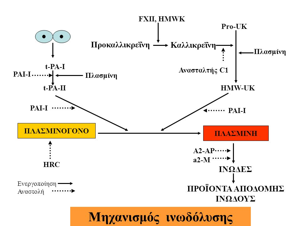 ΠΛΑΣΜΙΝΟΓΟΝΟ ΠΛΑΣΜΙΝΗ t-PA-I t-PA-II PAI-I HMW-UK Pro-UK Καλλικρεΐνη Προκαλλικρεΐνη Ανασταλτής C1 FXII, HMWK Πλασμίνη ΙΝΩΔΕΣ ΠΡΟΪΟΝΤΑ ΑΠΟΔΟΜΗΣ ΙΝΩΔΟΥΣ