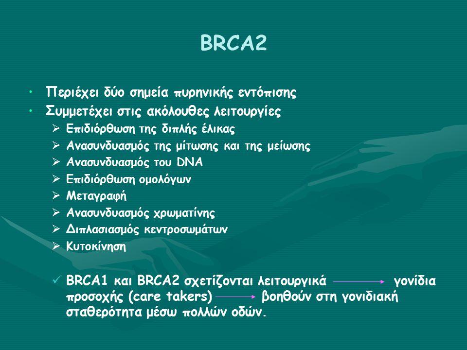 BRCA2 Περιέχει δύο σημεία πυρηνικής εντόπισης Συμμετέχει στις ακόλουθες λειτουργίες   Επιδιόρθωση της διπλής έλικας   Ανασυνδυασμός της μίτωσης και της μείωσης   Ανασυνδυασμός του DNA   Επιδιόρθωση ομολόγων   Μεταγραφή   Ανασυνδυασμός χρωματίνης   Διπλασιασμός κεντροσωμάτων   Κυτοκίνηση BRCA1 και BRCA2 σχετίζονται λειτουργικά γονίδια προσοχής (care takers)βοηθούν στη γονιδιακή σταθερότητα μέσω πολλών οδών.