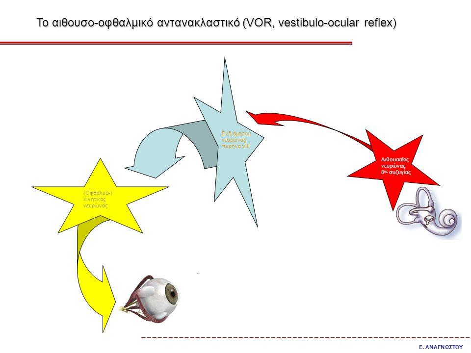 Αιθουσαίος νευρώνας 8 ης συζυγίας Ενδιάμεσος νευρώνας πυρήνα VIII (Οφθαλμο-) κινητικός νευρώνας Το αιθουσο-οφθαλμικό αντανακλαστικό (VOR, vestibulo-ocular reflex) Ε.