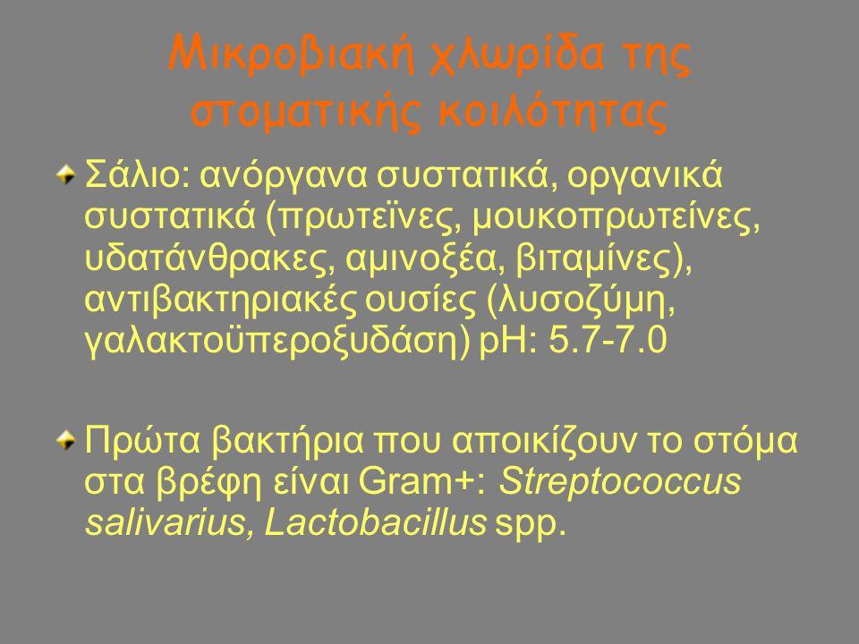 Μικροβιακή χλωρίδα της στοματικής κοιλότητας Σάλιο: ανόργανα συστατικά, οργανικά συστατικά (πρωτεϊνες, μουκοπρωτείνες, υδατάνθρακες, αμινοξέα, βιταμίν