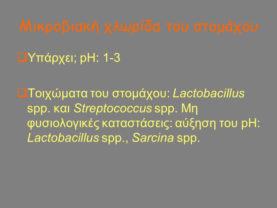 Μικροβιακή χλωρίδα του στομάχου  Υπάρχει; pH: 1-3  Τοιχώματα του στομάχου: Lactobacillus spp. και Streptococcus spp. Μη φυσιολογικές καταστάσεις: αύ