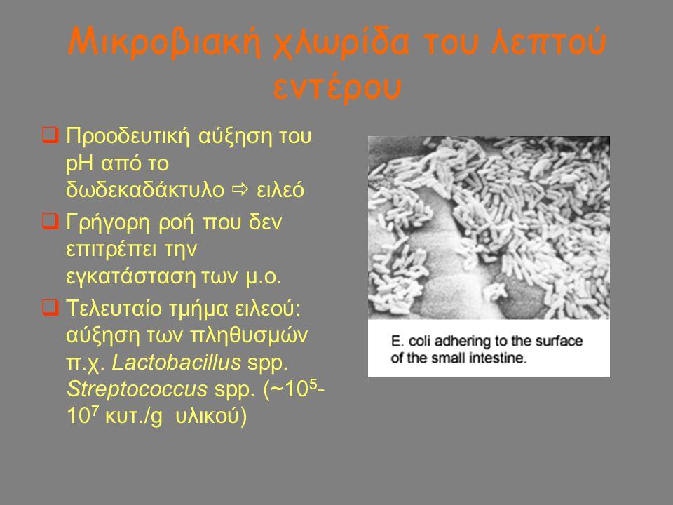 Μικροβιακή χλωρίδα του λεπτού εντέρου  Προοδευτική αύξηση του pH από το δωδεκαδάκτυλο  ειλεό  Γρήγορη ροή που δεν επιτρέπει την εγκατάσταση των μ.ο