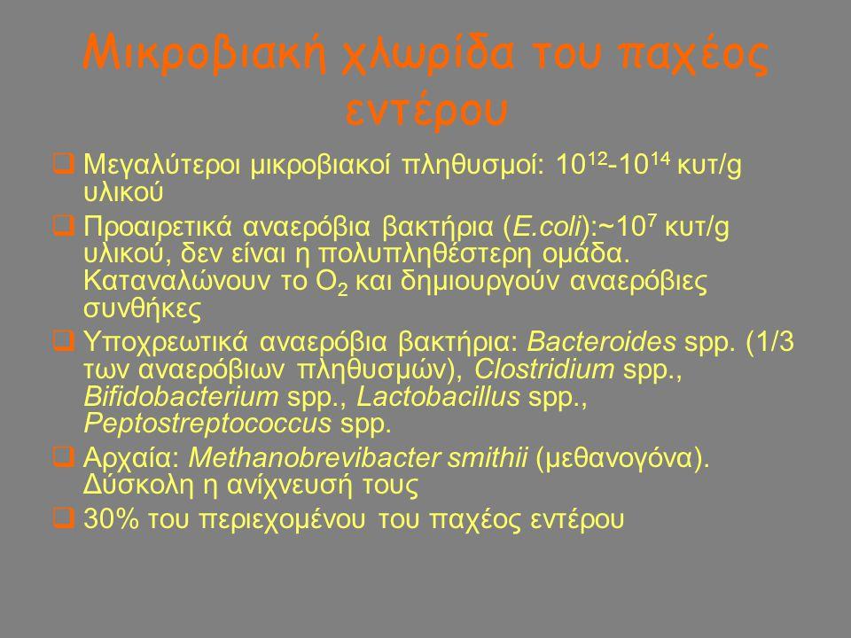 Μικροβιακή χλωρίδα του παχέος εντέρου  Μεγαλύτεροι μικροβιακοί πληθυσμοί: 10 12 -10 14 κυτ/g υλικού  Προαιρετικά αναερόβια βακτήρια (E.coli):~10 7 κ