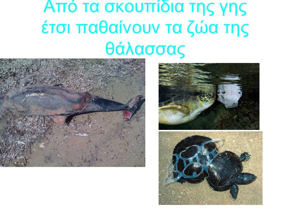 Από τα σκουπίδια της γης έτσι παθαίνουν τα ζώα της θάλασσας