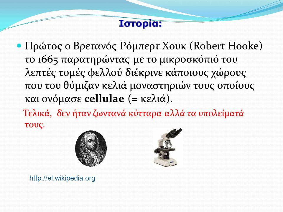 Ιστορία: Πρώτος ο Βρετανός Ρόμπερτ Χουκ (Robert Hooke) το 1665 παρατηρώντας με το μικροσκόπιό του λεπτές τομές φελλού διέκρινε κάποιους χώρους που του