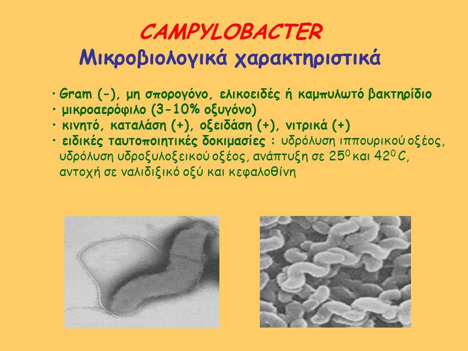 CAMPYLOBACTER Μικροβιολογικά χαρακτηριστικά Gram (-), μη σπορογόνο, ελικοειδές ή καμπυλωτό βακτηρίδιο μικροαερόφιλο (3-10% οξυγόνο) κινητό, καταλάση (