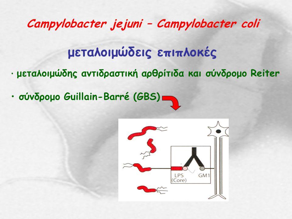 Campylobacter jejuni – Campylobacter coli μεταλοιμώδεις επιπλοκές μεταλοιμώδης αντιδραστική αρθρίτιδα και σύνδρομο Reiter σύνδρομο Guillain-Barré (GBS