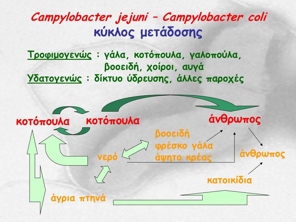 Campylobacter jejuni – Campylobacter coli κύκλος μετάδοσης Τροφιμογενώς : γάλα, κοτόπουλα, γαλοπούλα, βοοειδή, χοίροι, αυγά Υδατογενώς : δίκτυο ύδρευσ