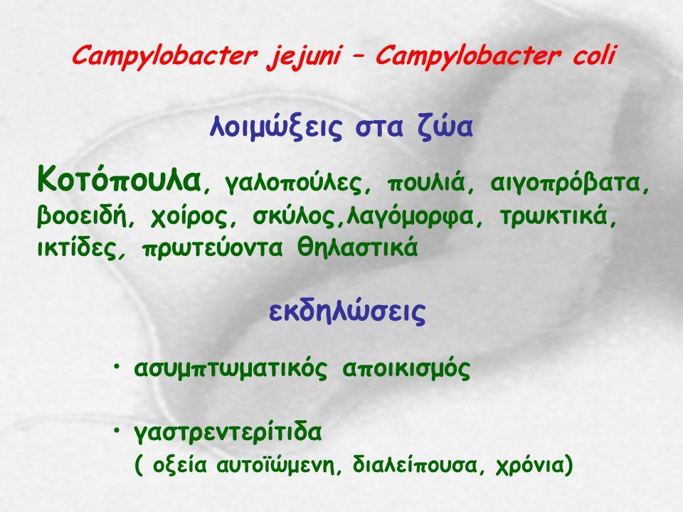 Campylobacter jejuni – Campylobacter coli λοιμώξεις στα ζώα Κοτόπουλα, γαλοπούλες, πουλιά, αιγοπρόβατα, βοοειδή, χοίρος, σκύλος,λαγόμορφα, τρωκτικά, ι
