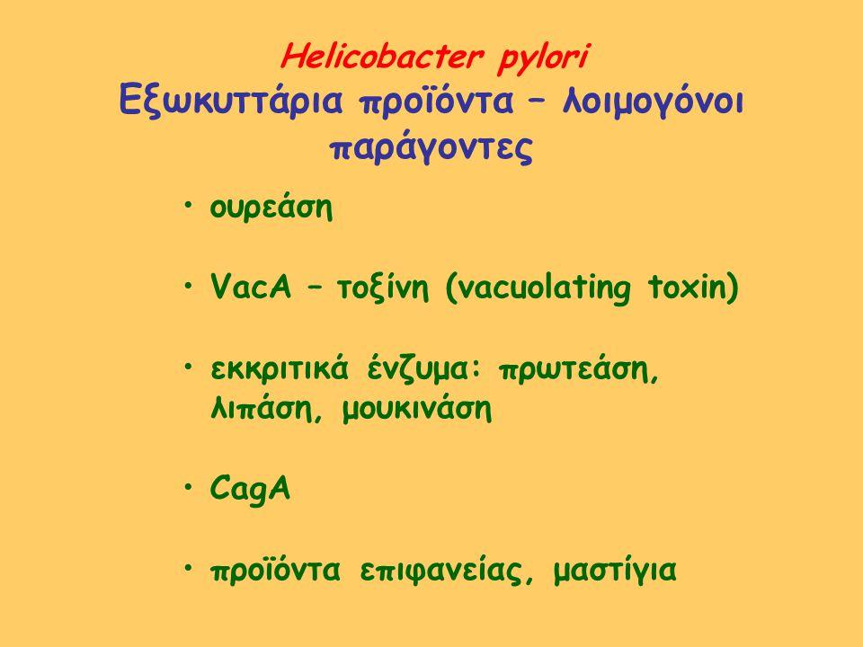 Helicobacter pylori Εξωκυττάρια προϊόντα – λοιμογόνοι παράγοντες ουρεάση VacA – τοξίνη (vacuolating toxin) εκκριτικά ένζυμα: πρωτεάση, λιπάση, μουκινά