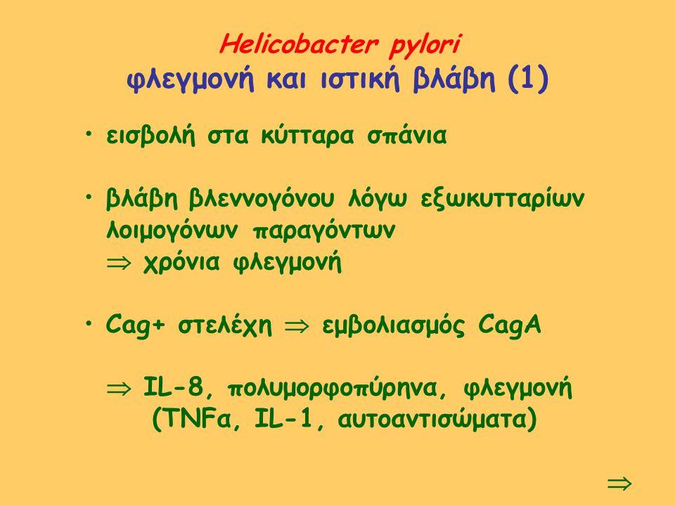 Helicobacter pylori φλεγμονή και ιστική βλάβη (1) εισβολή στα κύτταρα σπάνια βλάβη βλεννογόνου λόγω εξωκυτταρίων λοιμογόνων παραγόντων  χρόνια φλεγμο