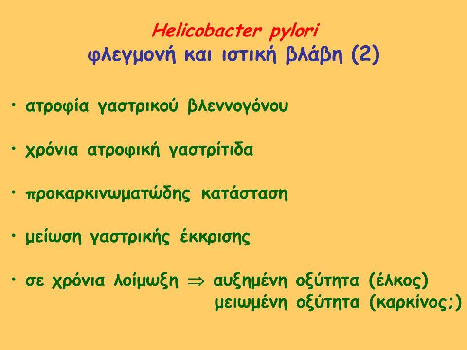 Helicobacter pylori φλεγμονή και ιστική βλάβη (2) ατροφία γαστρικού βλεννογόνου χρόνια ατροφική γαστρίτιδα προκαρκινωματώδης κατάσταση μείωση γαστρική