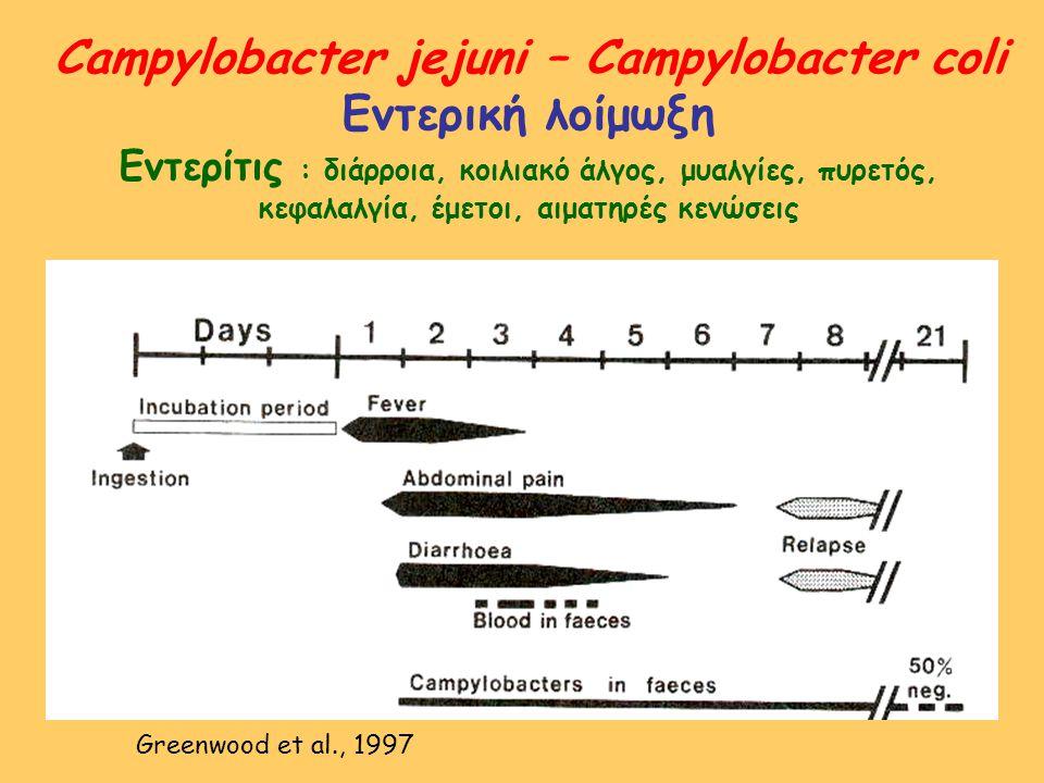 Campylobacter : εργαστηριακή διαγνωστική Υλικό : κόπρανα, αίμα άμεση μικροσκοπική ανίχνευση (χρώση κατά Gram) άμεση καλλιέργεια σε ειδικά θρεπτικά υλικά (Skirrow, CCDA, CVA, κ.α.) – επώαση 37-42 ο C σε μικροαερόφιλο περιβάλλον εμπλουτισμός σε υγρό θρεπτικό υλικό ( Campythio, Preston ) ανακαλλιέργεια σε στερεό υλικό