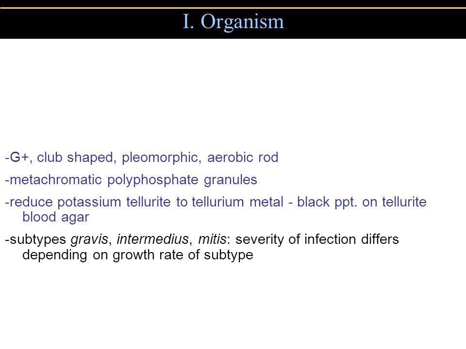 I. Organism -G+, club shaped, pleomorphic, aerobic rod -metachromatic polyphosphate granules -reduce potassium tellurite to tellurium metal - black pp