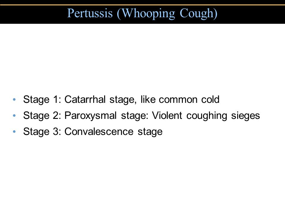 Stage 1: Catarrhal stage, like common cold Stage 2: Paroxysmal stage: Violent coughing sieges Stage 3: Convalescence stage Pertussis (Whooping Cough)