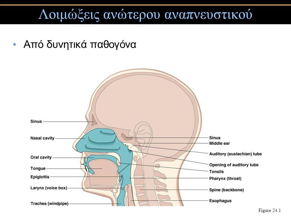 Από δυνητικά παθογόνα Λοιμώξεις ανώτερου αναπνευστικού Figure 24.1
