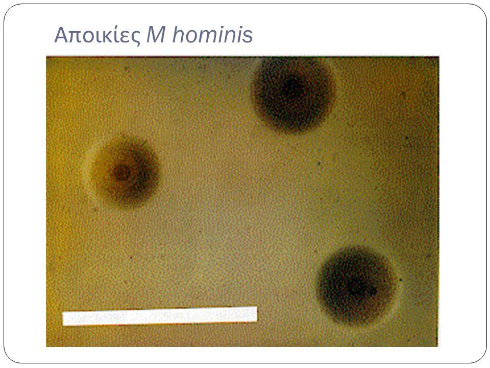 Αποικίες M hominis