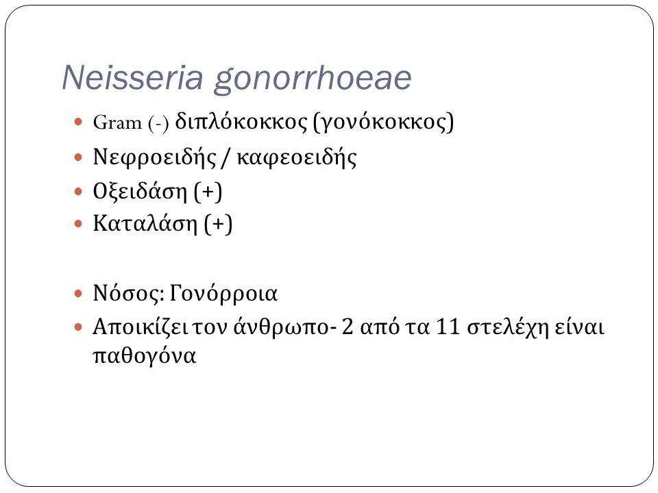 Neisseria gonorrhoeae Gram (-) διπλόκοκκος ( γονόκοκκος ) Νεφροειδής / καφεοειδής Οξειδάση (+) Καταλάση (+) Νόσος : Γονόρροια Αποικίζει τον άνθρωπο -