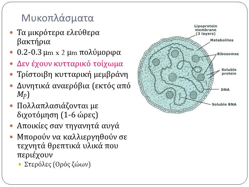 Μυκοπλάσματα Τα μικρότερα ελεύθερα βακτήρια 0.2-0.3 μ m x 2 μ m πολύμορφα Δεν έχουν κυτταρικό τοίχωμα Τρίστοιβη κυτταρική μεμβράνη Δυνητικά αναερόβια
