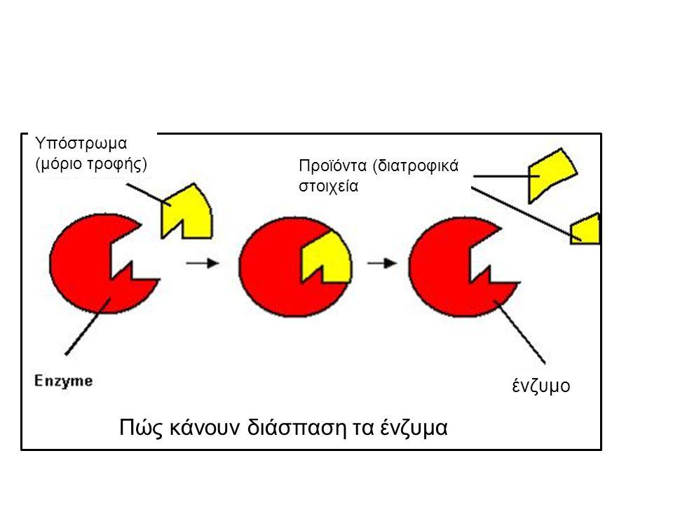 Αντιδράσεις διάσπασης Υπόστρωμα (μόριο τροφής) Πώς κάνουν διάσπαση τα ένζυμα ένζυμο Προϊόντα (διατροφικά στοιχεία