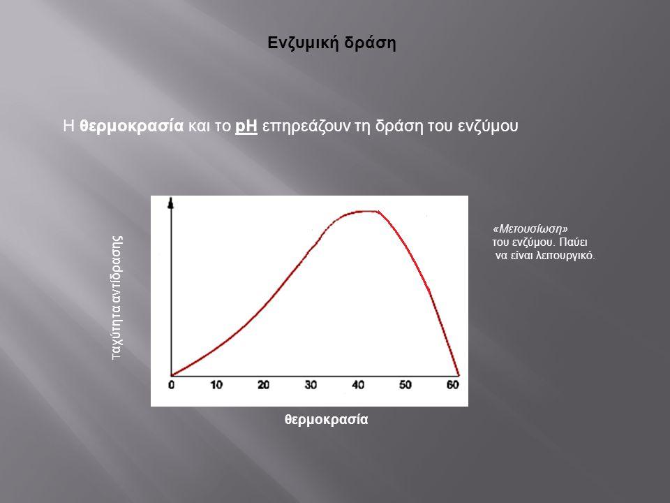 Ενζυμική δράση Η θερμοκρασία και το pH επηρεάζουν τη δράση του ενζύμου Τ αχύτητα αντίδρασης θερμοκρασία Βέλτιστη Θ Ο (περίπου 40 ο C ) «Μετουσίωση» το