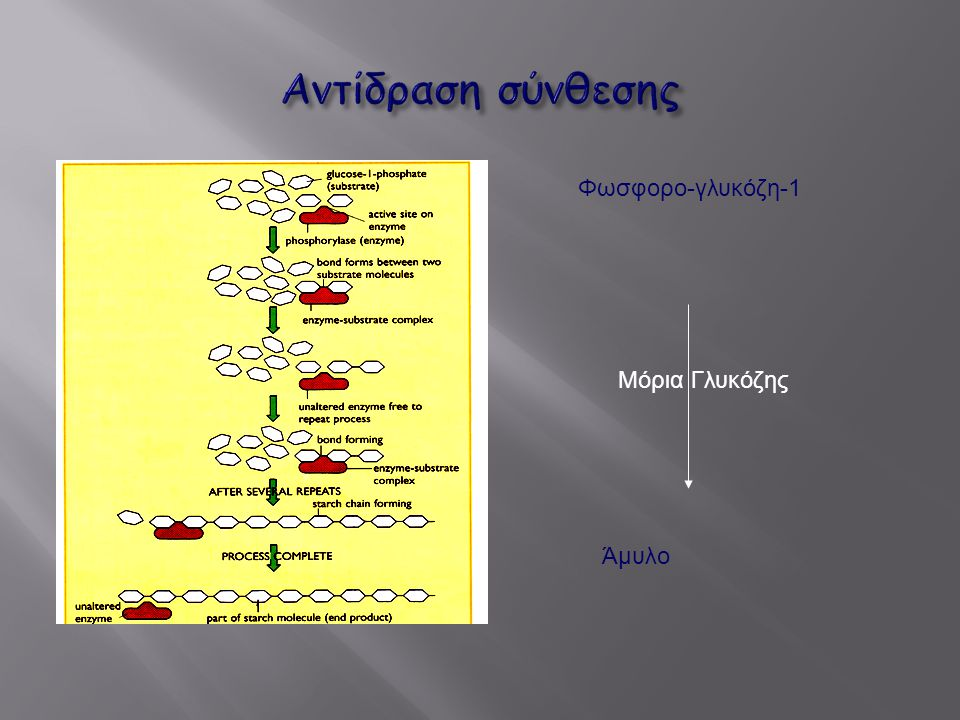 Φωσφορο-γλυκόζη-1 Άμυλο Μόρια Γλυκόζης