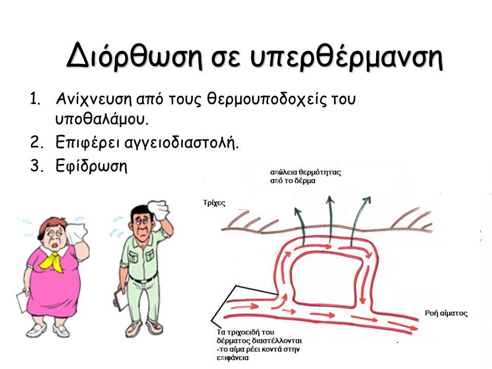 Διόρθωση σε υπερθέρμανση 1.Ανίχνευση από τους θερμουποδοχείς του υποθαλάμου. 2.Επιφέρει αγγειοδιαστολή. 3.Εφίδρωση