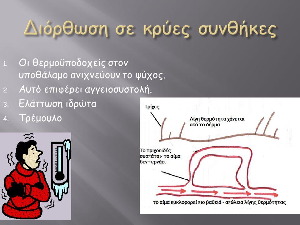 1. Οι θερμοϋποδοχείς στον υποθάλαμο ανιχνεύουν το ψύχος. 2. Αυτό επιφέρει αγγειοσυστολή. 3. Ελάττωση ιδρώτα 4. Τρέμουλο