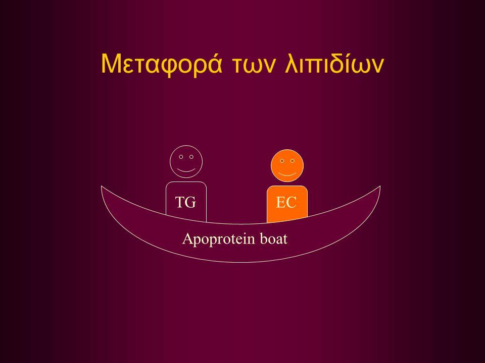 Μεταφορά των λιπιδίων TGEC Apoprotein boat
