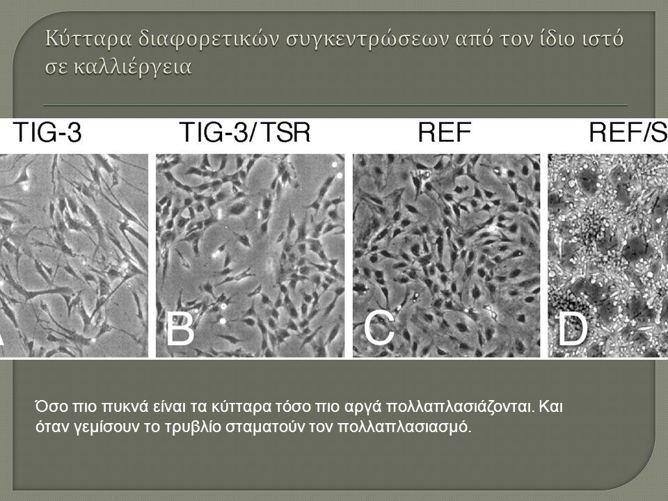 Όσο πιο πυκνά είναι τα κύτταρα τόσο πιο αργά πολλαπλασιάζονται.