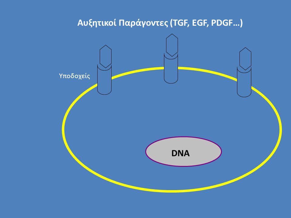 Αυξητικοί Παράγοντες (TGF, EGF, PDGF…) DNA Υποδοχείς