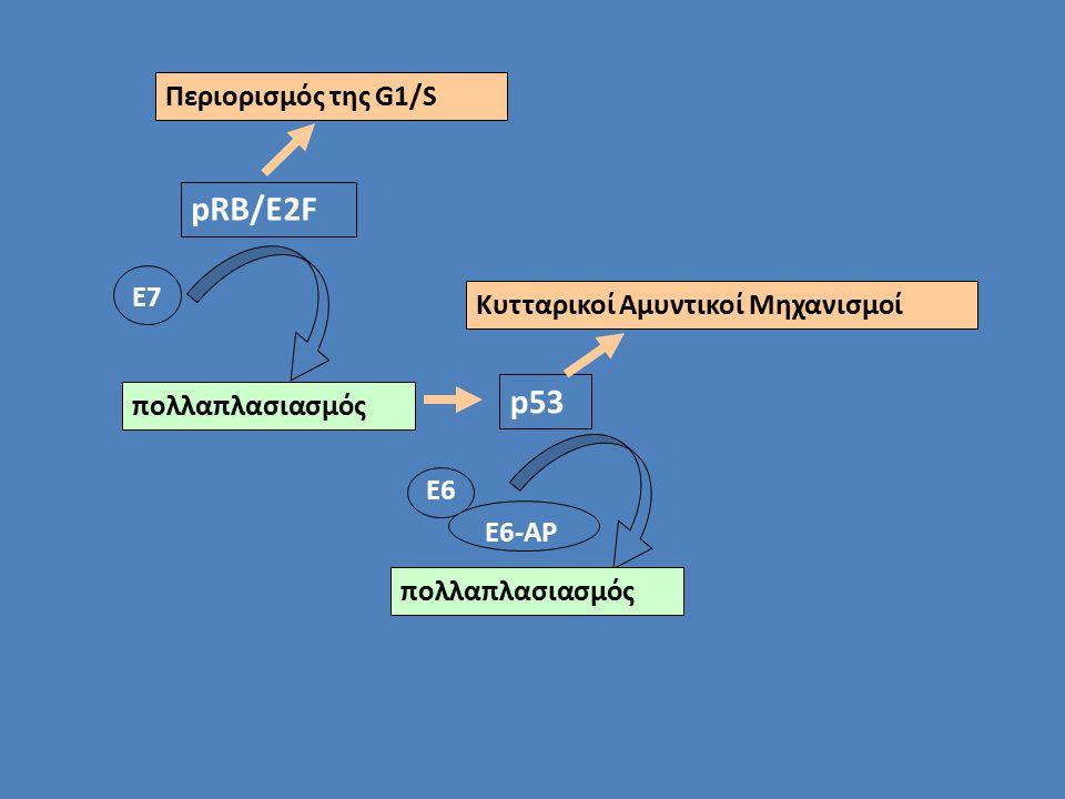 pRB/E2F Περιορισμός της G1/S Ε7 πολλαπλασιασμός p53 Κυτταρικοί Αμυντικοί Μηχανισμοί Ε6 Ε6-ΑΡ πολλαπλασιασμός