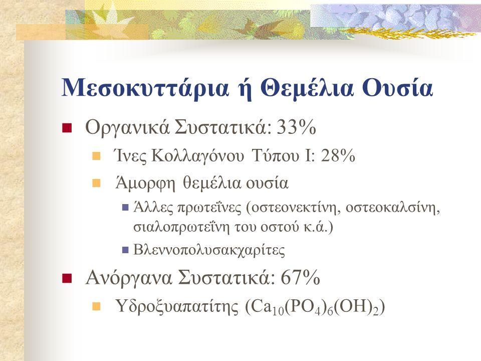 Μεσοκυττάρια ή Θεμέλια Ουσία Οργανικά Συστατικά: 33% Ίνες Κολλαγόνου Τύπου Ι: 28% Άμορφη θεμέλια ουσία Άλλες πρωτεΐνες (οστεονεκτίνη, οστεοκαλσίνη, σι