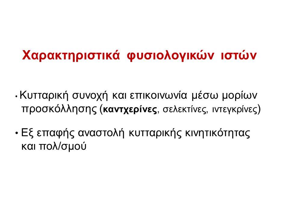 Α) ΕΠΙΘΗΛΙΑΚΗ - ΜΕΣΕΓΧΥΜΑΤΙΚΗ ΜΕΤΑΠΤΩΣΗ Β) «ΑΝΟΙΚΙΑ»