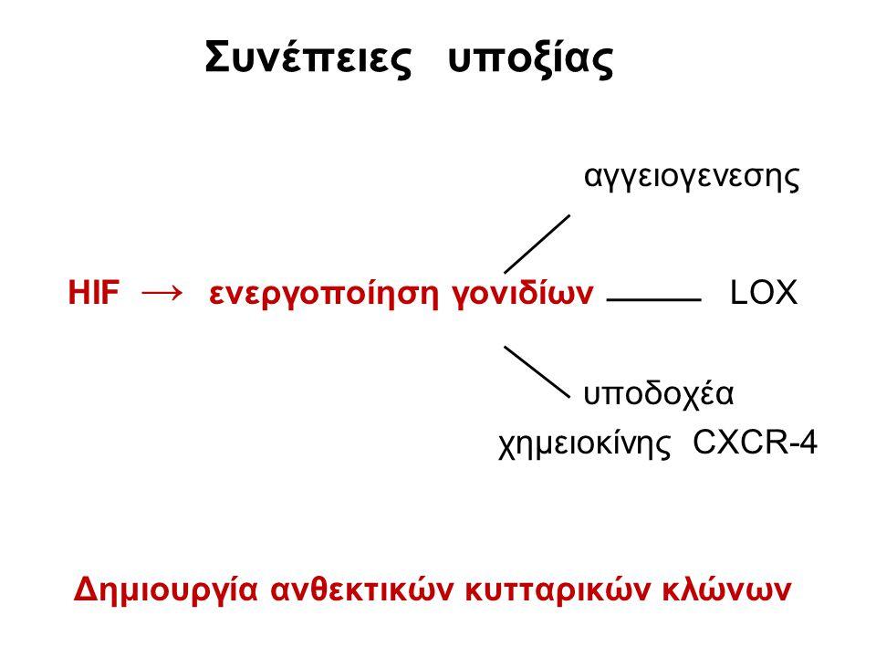 αγγειογενεσης HIF → ενεργοποίηση γονιδίων LOX υποδοχέα χημειοκίνης CXCR-4 Δημιουργία ανθεκτικών κυτταρικών κλώνων Συνέπειες υποξίας