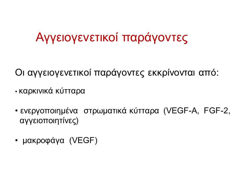 Αγγειογενετικοί παράγοντες Οι αγγειογενετικοί παράγοντες εκκρίνονται από: καρκινικά κύτταρα ενεργοποιημένα στρωματικά κύτταρα (VEGF-A, FGF-2, αγγειοπο