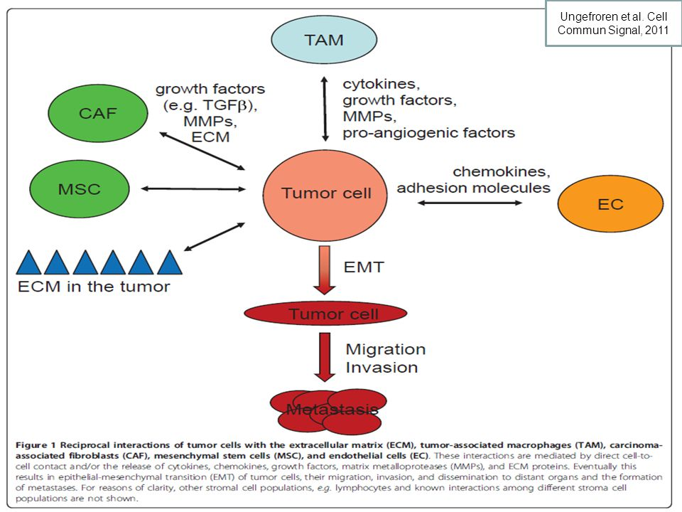 Ungefroren et al. Cell Commun Signal, 2011