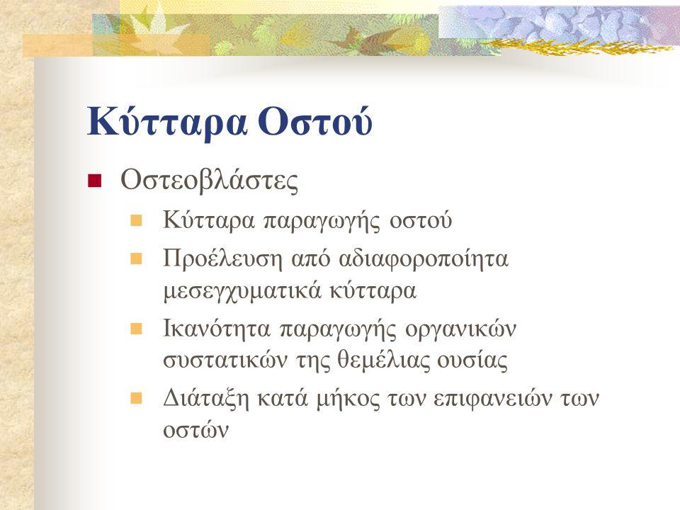 Οστεοβλάστες