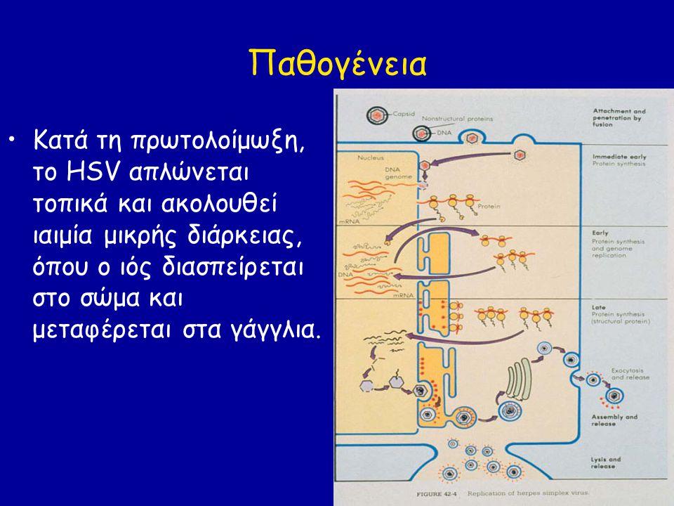 Νεογνική ανεμευλογιά Ο VZV περνά στον πλακούντα προς το τέλος της εγκυμοσύνης και μολύνει το έμβρυο.