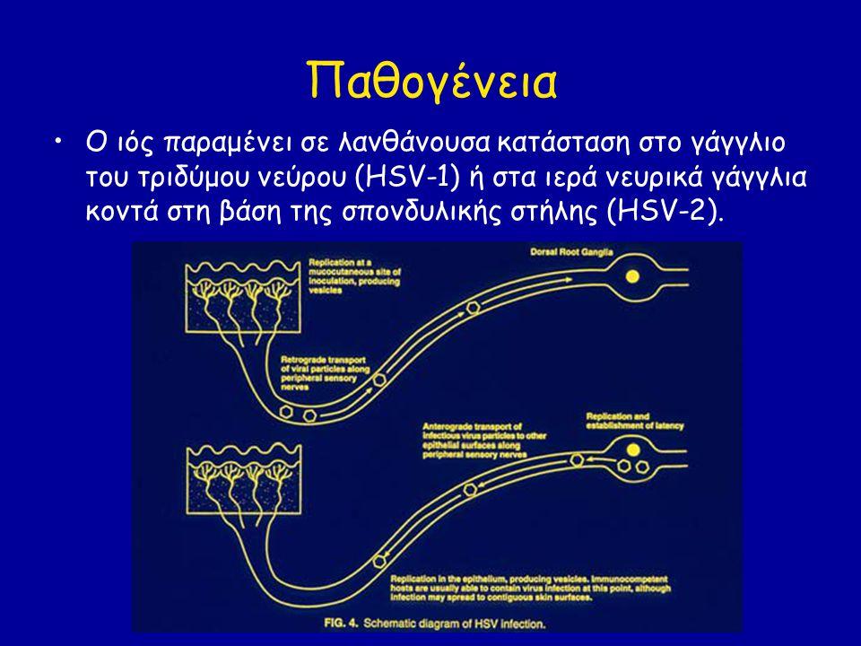 Παθογένεια Ο ακριβής μηχανισμός της παραμονής του ιού δεν είναι γνωστός.