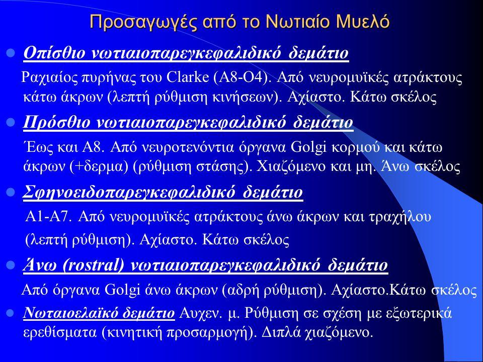 Προσαγωγές από το Νωτιαίο Μυελό Οπίσθιο νωτιαιοπαρεγκεφαλιδικό δεμάτιο Ραχιαίος πυρήνας του Clarke (A8-O4). Από νευρομυϊκές ατράκτους κάτω άκρων (λεπτ