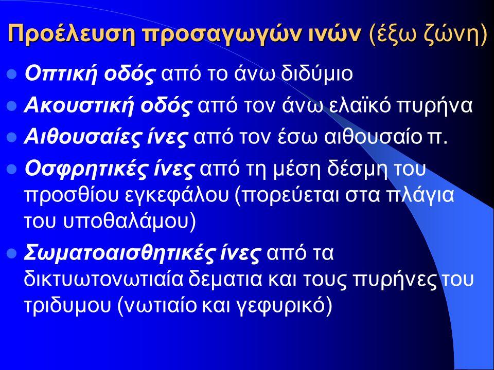 ΠΑΡΕΓΚΕΦΑΛΙΔΑ Αρχαιοπαρεγκεφαλίδα Αιθουσαίο σύστημα – ισορροπία (Αιθουσοπαρεγκεφαλίδα) Παλαιοπαρεγκεφαλίδα Αδρές κινήσεις κεφαλής-σώματος Όρθια στάση – Βάδιση (Νωτιαιοπαρεγκεφαλίδα) Νεοπαρεγκεφαλίδα Λεπτές εκούσιες κινήσεις (Γεφυροπαρεγκεφαλίδα)
