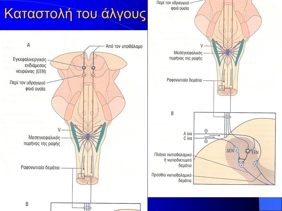 Συνδέσεις οροφιαίου πυρήνα (αρχαιο-παρ) Ίνες προς μέσο και άνω αιθουσαίο πυρήνα ελέγχουν τις κινήσεις των οφθαλμών Ίνες προς έξω αιθουσαίο πυρήνα ελέγχουν τη στάση και την ισορροπία μέσω του αιθουσαιονωτιαίου δεματίου (ευοδώνει τους εκτείνοντες, αναστέλλει τους καμπτήρες) Παρέχει ίνες προς το Δικτυωτό Σχηματισμό του Προμήκους