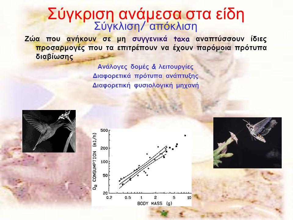 Σύγκριση ανάμεσα στα είδη Σύγκλιση / απόκλιση Ζώα που ανήκουν σε μη συγγενικά taxa αναπτύσσουν ίδιες προσαρμογές που τα επιτρέπουν να έχουν παρόμοια π
