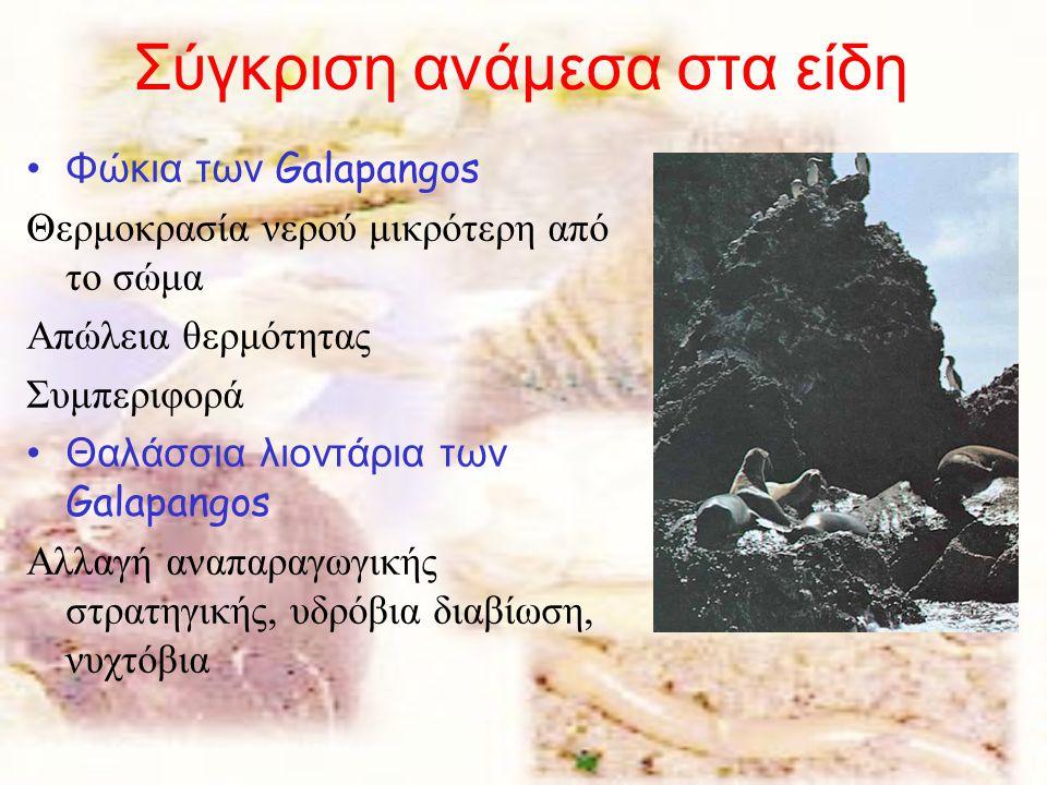 Σύγκριση ανάμεσα στα είδη Φώκια των Galapangos Θερμοκρασία νερού μικρότερη από το σώμα Απώλεια θερμότητας Συμπεριφορά Θαλάσσια λιοντάρια των Galapangos Αλλαγή αναπαραγωγικής στρατηγικής, υδρόβια διαβίωση, νυχτόβια
