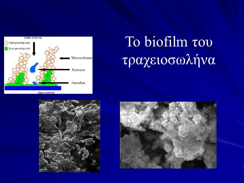 Το biofilm του τραχειοσωλήνα